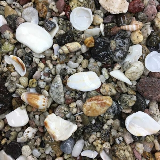 Baja Shell Pebble Mix